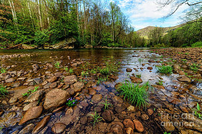 Williams River Spring Art Print