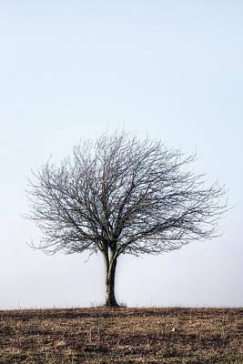 Winter Trees Photograph - Winter Tree by Joana Kruse