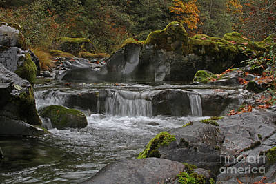 Photograph - Yellow-bottom Creek by Gary Wing