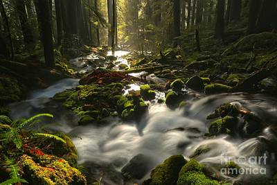 Photograph - Sol Duc Rainforest Highlights by Adam Jewell