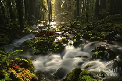 Water Filter Photograph - Sol Duc Rainforest Highlights by Adam Jewell