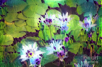 Water Lillies Photograph - Jeweled Water Lilies by Amy Cicconi