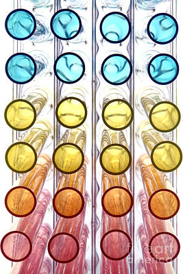 Photograph - Laboratory Test Tubes In Science Research Lab by Olivier Le Queinec