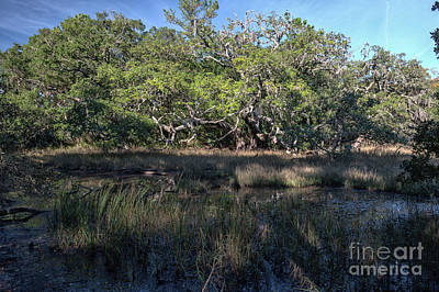 Photograph - Daniel Island Salt Marsh by Dale Powell