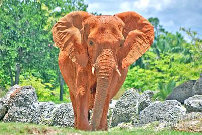 Photograph - 65- Asian Elephant by Joseph Keane