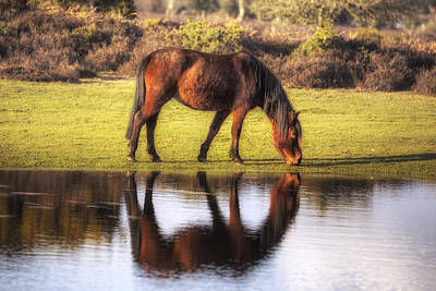 Pond Horses Photograph - New Forest - England by Joana Kruse