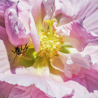 Christmas Trees - 6629- Honey Bee by David Lange