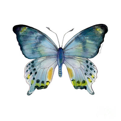 On-white Painting - 68 Laglaizei Butterfly by Amy Kirkpatrick