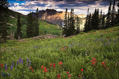 Photograph - Albion Basin Wildflowers by Utah Images