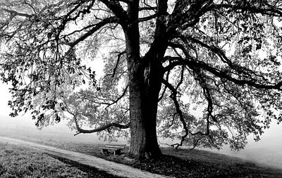 Photograph - beautiful old Oak Tree by Werner Lehmann