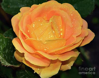Beautiful Rose Art Print by Elvira Ladocki