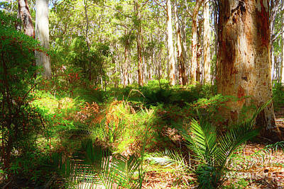 Photograph - Boranup Forest II by Cassandra Buckley