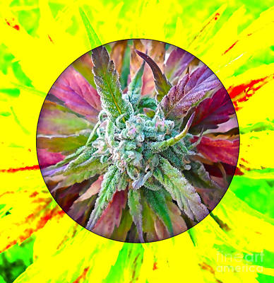 Mixed Media - Cannabis 420 Collection by Marvin Blaine