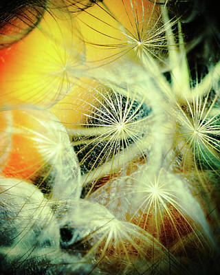 Dandelions Art Print by Iris Greenwell