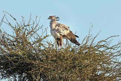 Vogel Wall Art - Photograph - Etosha - Namibia by Joana Kruse