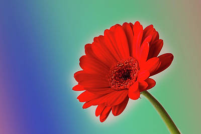 Photograph - Flower by Christine Sponchia