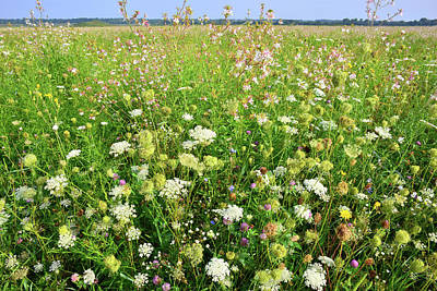 Photograph - Glacial Park Wildflowers by Ray Mathis