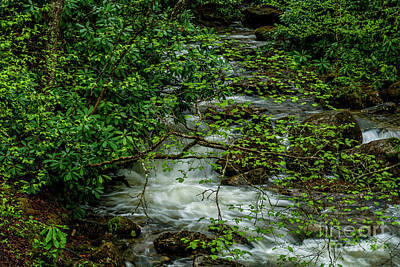 Art Print featuring the photograph Kens Creek Cranberry Wilderness by Thomas R Fletcher