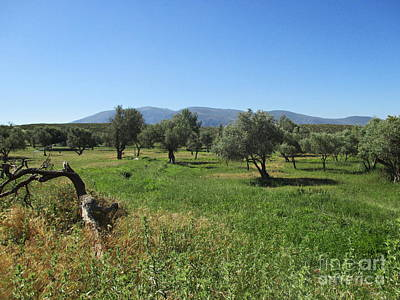 Photograph - Olive Trees Near Lanjaron by Chani Demuijlder
