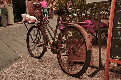 Photograph - Lucca Italy by Cendrine Marrouat