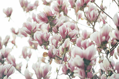 Danny Phillips Collage Art - Magnolia by Jelena Jovanovic