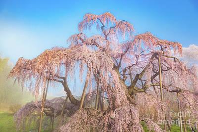 Photograph - Miharu Takizakura Weeping Cherry29 by Tatsuya Atarashi