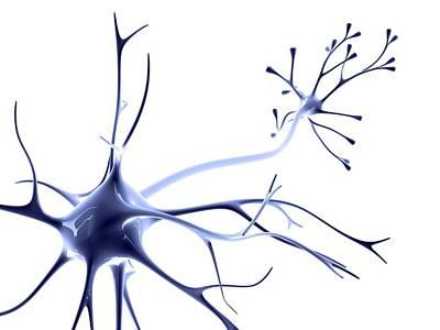 Nerve Cell Art Print by Pasieka