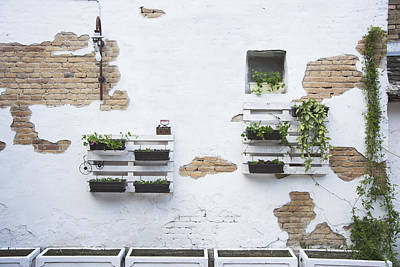 Fun Patterns - Pallet ideas for gardening by Newnow Photography By Vera Cepic