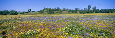 Panoramic View Of Spring Flowers Art Print