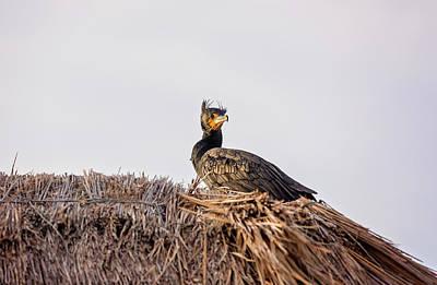 Photograph - Pelican by Peter Lakomy