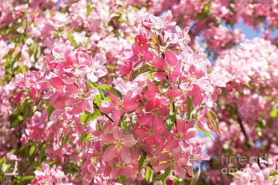 Photograph - Pink Cherry Flowers by Irina Afonskaya