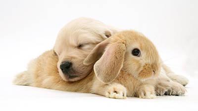 Rabbit And Puppy Art Print by Jane Burton