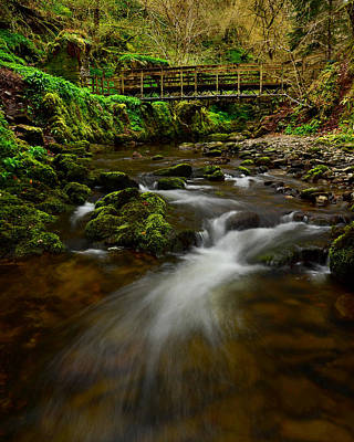 Photograph - Reelig Glen by Gavin MacRae
