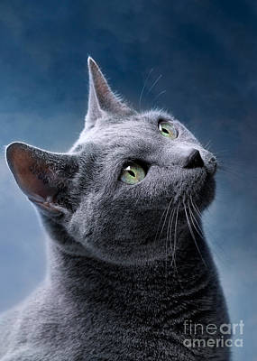Classical Masterpiece Still Life Paintings - Russian Blue Cat by Nailia Schwarz