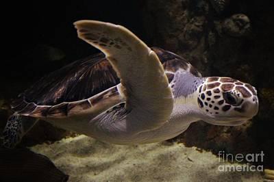 Sea Turtle Art Print by Paulette Thomas