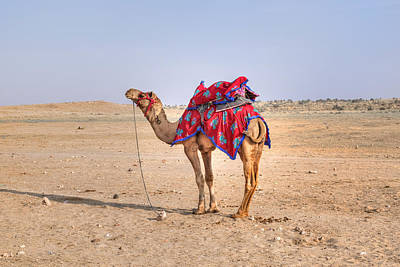Rajasthan Photograph - Thar Desert - India by Joana Kruse
