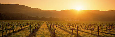 Grapevines Photograph - Vineyard, Napa Valley, California, Usa by Panoramic Images