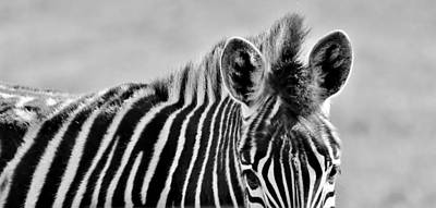 Photograph - Zebra Close Up by Werner Lehmann
