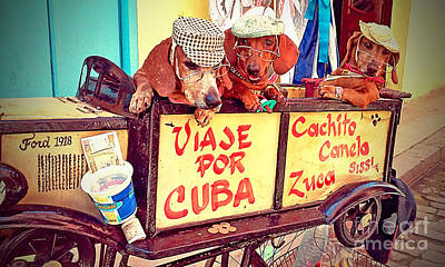 Dachshund Art Photograph - Havana, Cuba by Chris Andruskiewicz