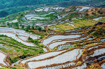 Photograph - Longji Terraced Fields Scenery by Carl Ning