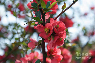 Tree Blossoms Art Print by Elvira Ladocki