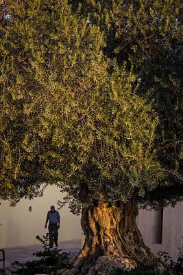 Namaste With Pixels - 700 Year Old Olive Tree by Joshua Van Lare