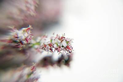 Photograph - Spring Flower by Elvira Ladocki