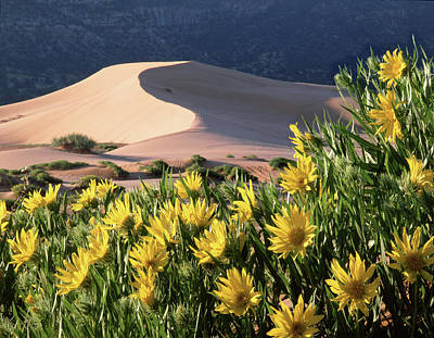 Photograph - 712403 H Sunflowers And Sand Dunes by Ed Cooper Photography