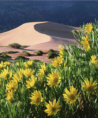 Photograph - 712404 V Sunflowers And Sand Dunes by Ed Cooper Photography