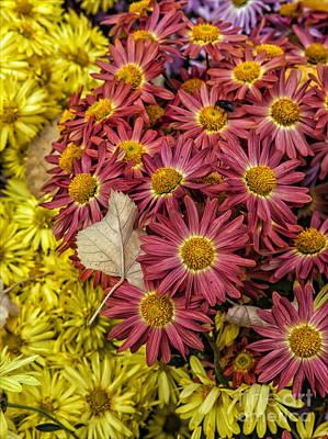 Target Threshold Photography - Fall Foliage by Robert Ullmann