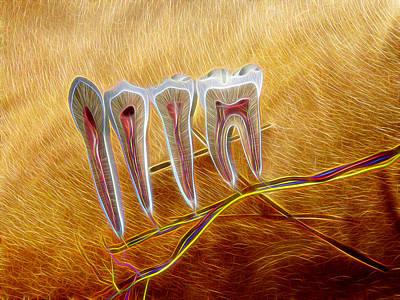 Chiropractic Wall Art - Digital Art - Anatomy Art by Joseph Ventura & Chiropractic Art | Fine Art America