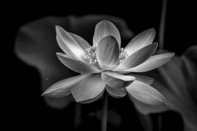 Photograph - The Big Flower by Francisco Gomez