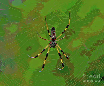 Photograph - 78- Banana Spider by Joseph Keane