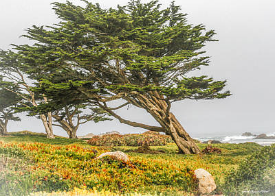 Photograph - #7803 - Monterey, California by Heidi Osgood-Metcalf
